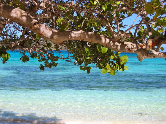Die karibische Insel Barbados