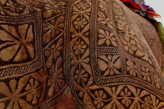 Paquistaneses tatuam pelo camelo
