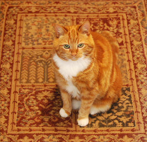 Dog Urine Smell In Wool Carpet: Rug Master: Dogs, Cats And Rugs