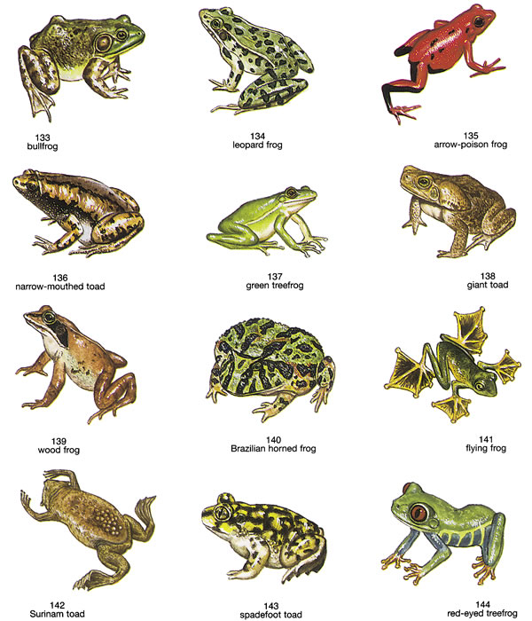 Inkspired Musings There Be Frogs A Jumpin