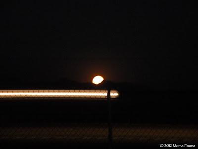 2012 Migration Moonrise on I-15