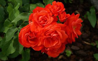 #9 Spectacular Flowers Images for Desktop