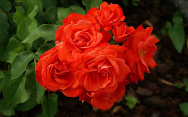 #9 Spectacular Flowers Images for Desktop