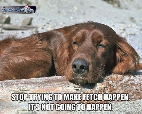 funny dog humor picture