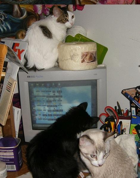 Aristocats' online Felinology phd degree program 2006