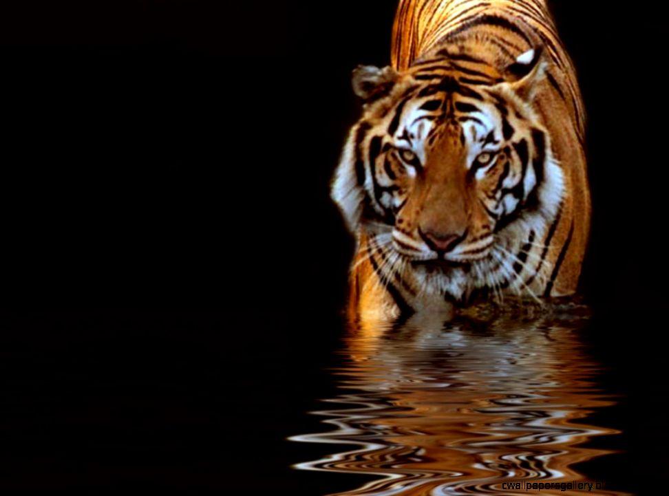 Beautiful Nature and Animals