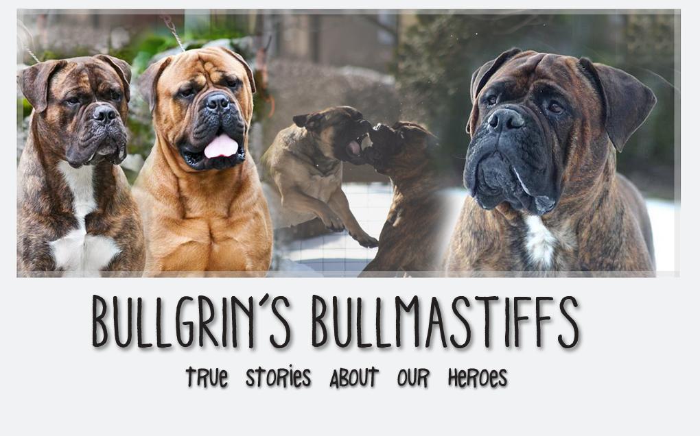 Bullgrin's Bullmastiffs