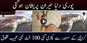 Karachi Main Ajeeb O Ghareeb Samandari Makhlooq