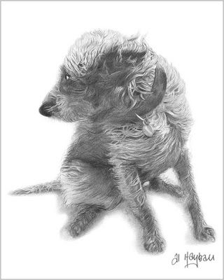 pencil study of a bedlington whippet