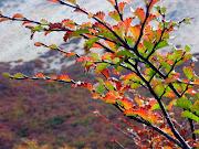 EL OTOÑO. En otoño cambia el tiempo, y se va el calor y llega el viento. lengas en otono