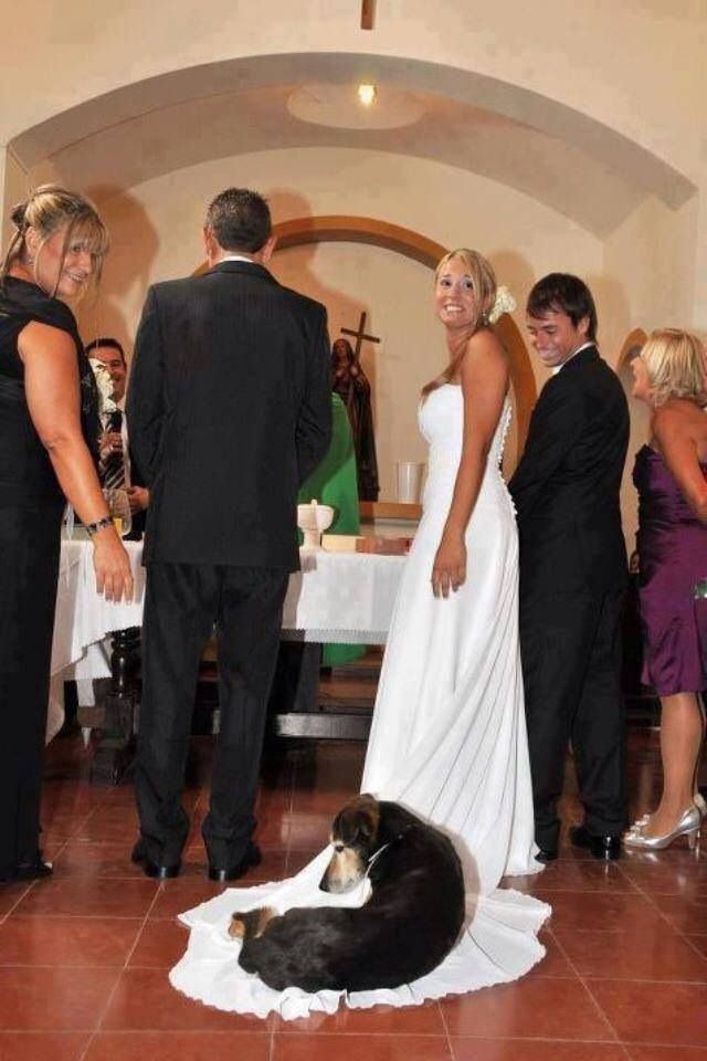 here comes the bride and the dog barks blooms