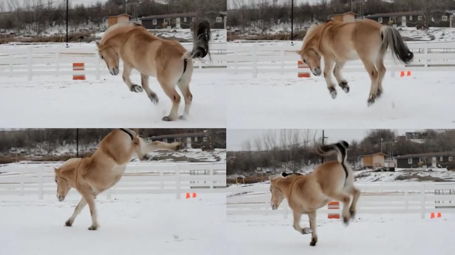 Horse bucking