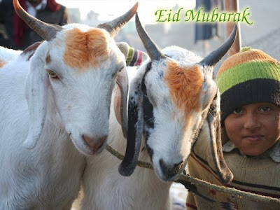 Eid ul Adha Greetings, Bakra Eid Wishes Greeting Cards