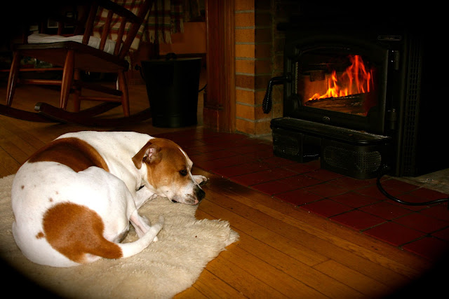 Dog in front of the Wood Burning Stove