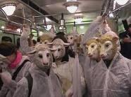 élő állat szállítás1