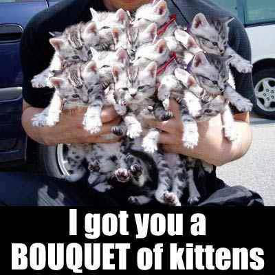 I got you a bouquet of kittens