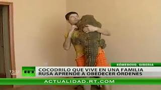 cocodrilo de mascota