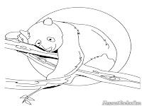 Gambar Sketsa Hitam Putih Mewarnai Panda Yang Lucu Bermain Di Cabang Pohon