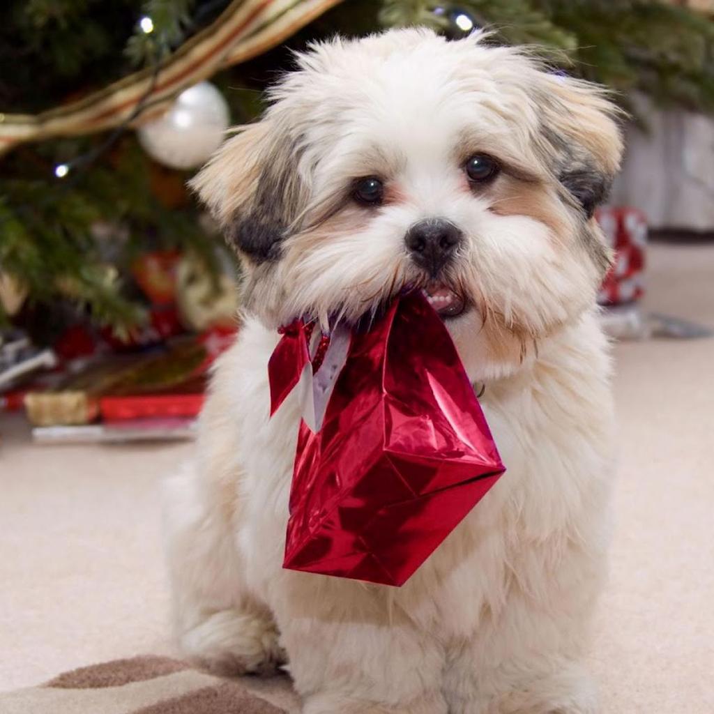 christmas puppy wallpaper - photo #11