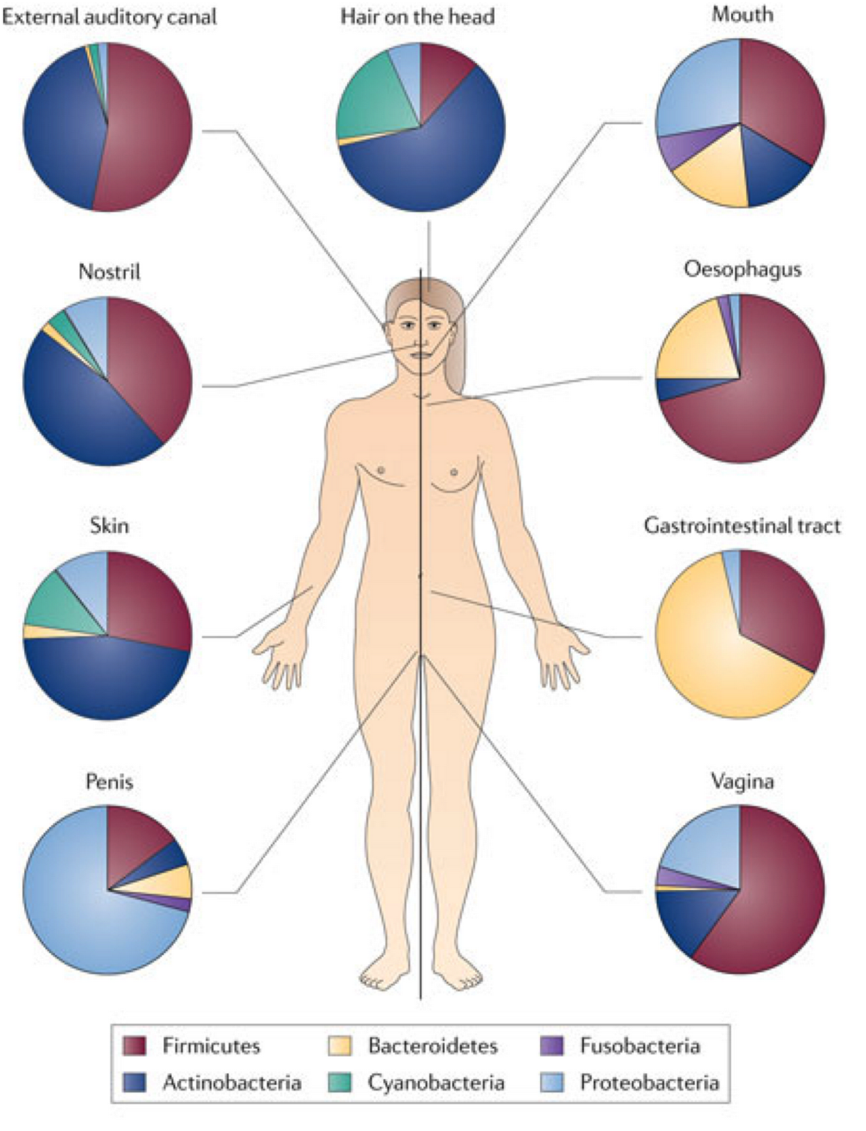 the human microbiome project biology essay One of the main goals of the hmp was to create a baseline view of the healthy human microbiome 2012 plos computational biology data human microbiome project.
