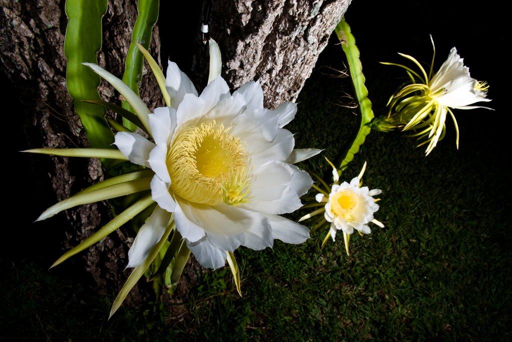 midnight flower Gallery