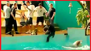 Unbelievable, Russians, Russian Fight, Aquarium, crazy fight, video, tapandaola111