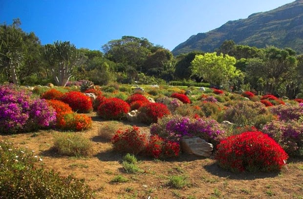 World's most beautiful gardens - Kirstenbosch National Botanical Garden, South Africa