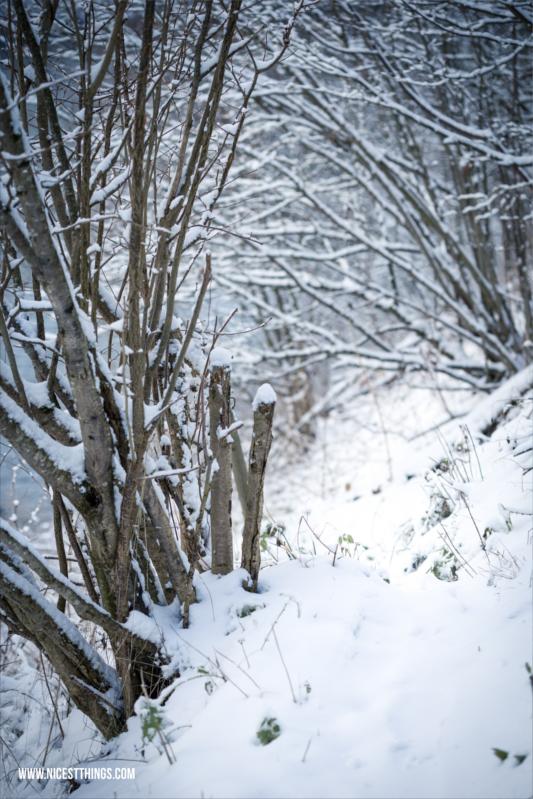 Wintershooting Weg im Schnee