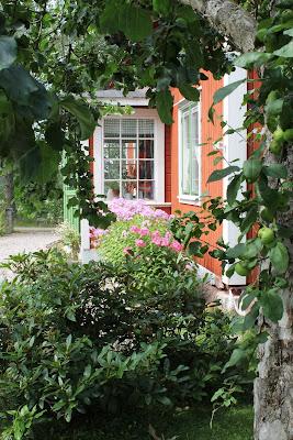 Äppelträd, rhododendron, höstflox