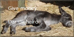Donativos em dinheiro para ajudar os burricos / Give money to help donkeys