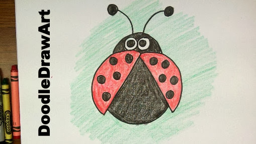 how to draw a lady bug!