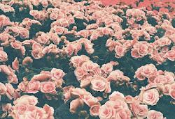 Sí, amo las flores.