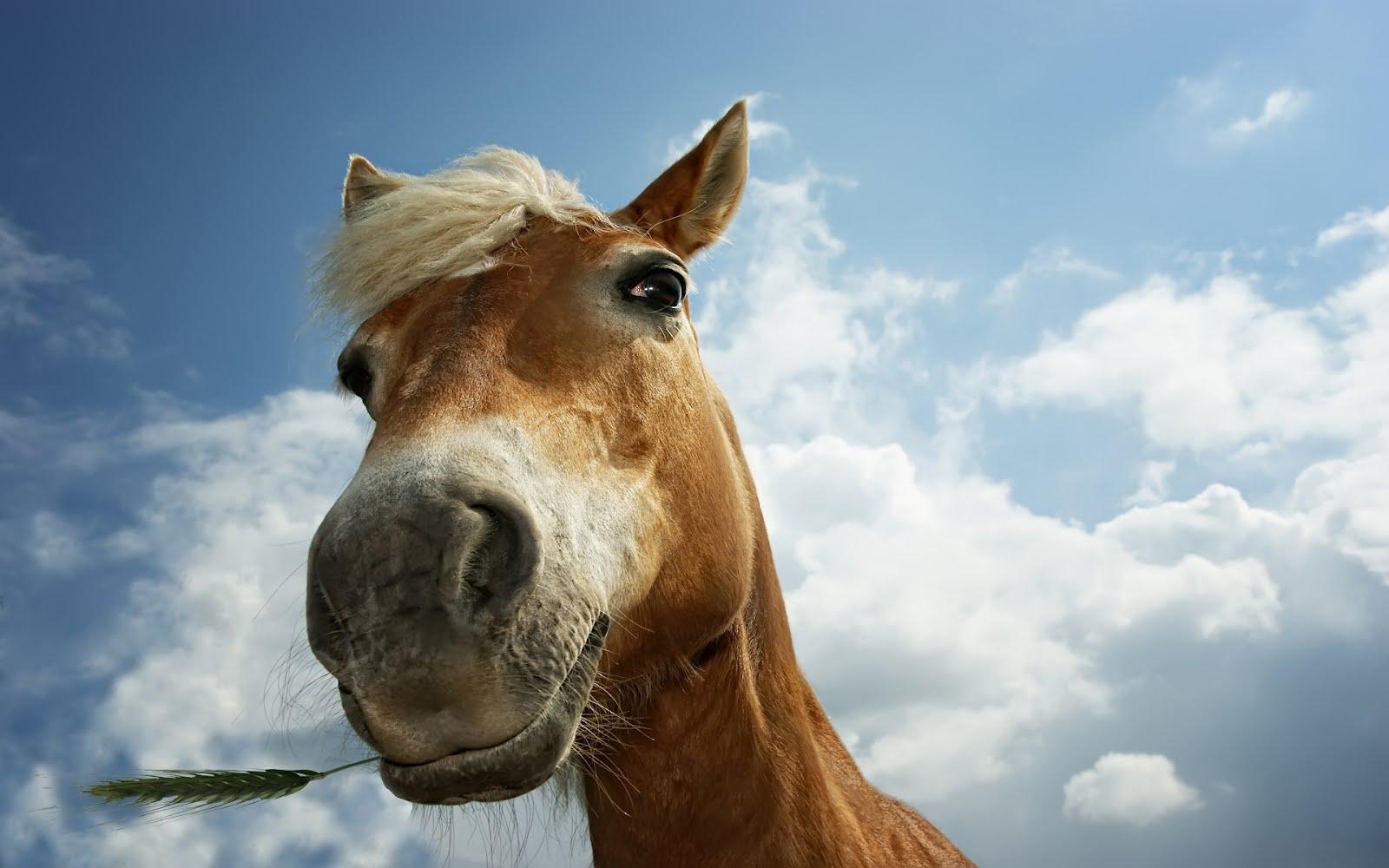 Great   Wallpaper Horse Lightning - wallpaper%2Bhorse%2B0110  Perfect Image Reference_95839.jpg