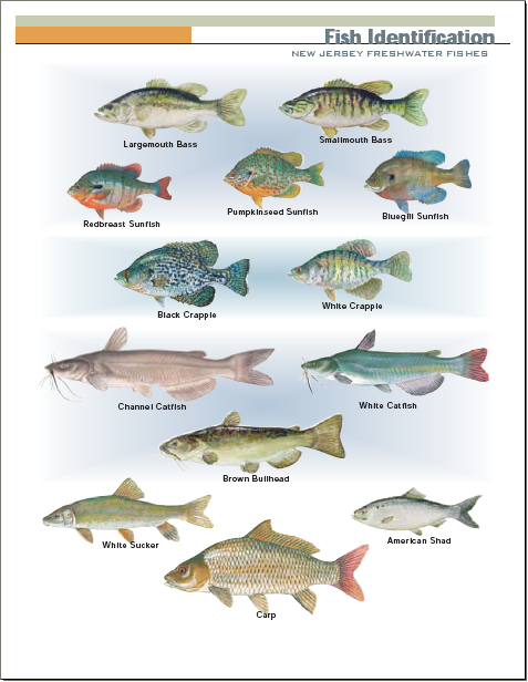 Freshwater Fish Types Freshwater Fish Fishing Chart