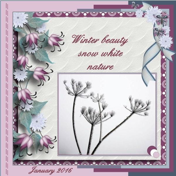 Jan.2016- Winter beauty snow white nature