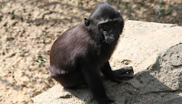 Memphis Zoo reports small monkey escaped enclosure