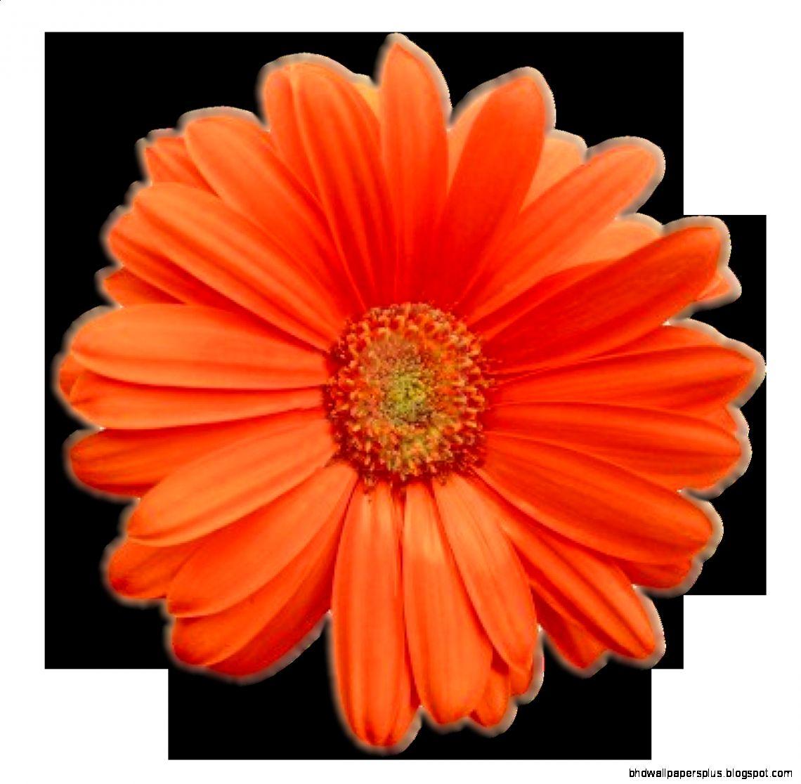 Flower Power  Revitalize Not Militarize