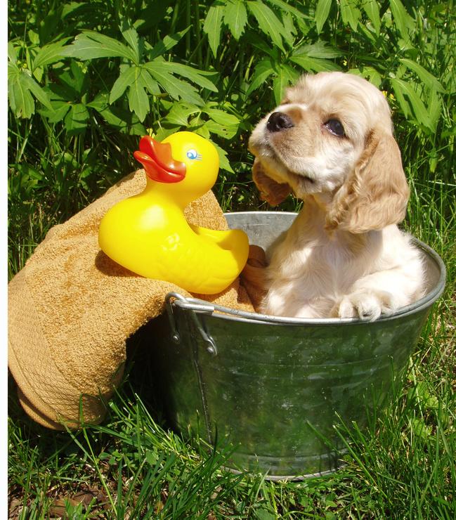 pet+store+online+puppy+bath - Como e por quê dar Banho no seu Pet?