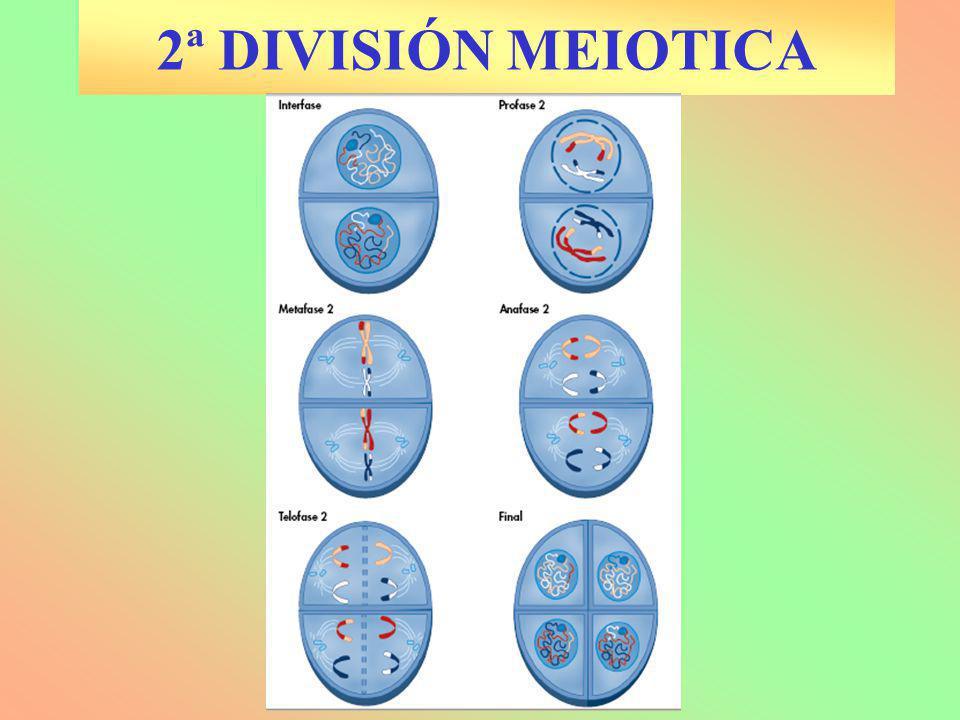 La Fotosíntesis Mitosis y Miosis