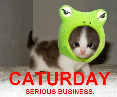 funny cat pic |Daily Pictures