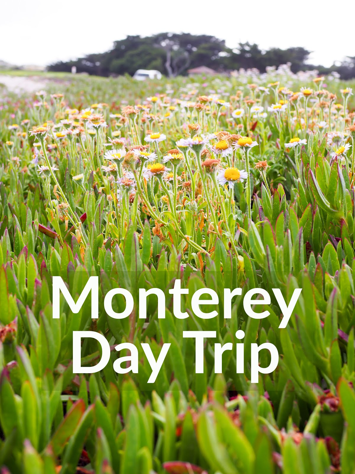 Monterey Day Trip
