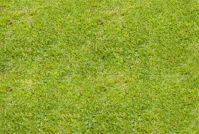 baground rumput