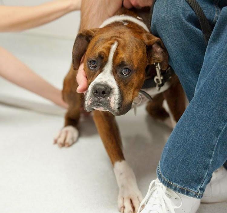 invloed mens op het gedrag van honden