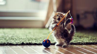 Un lindo gatito jugando en el jardín - Little kitten playing