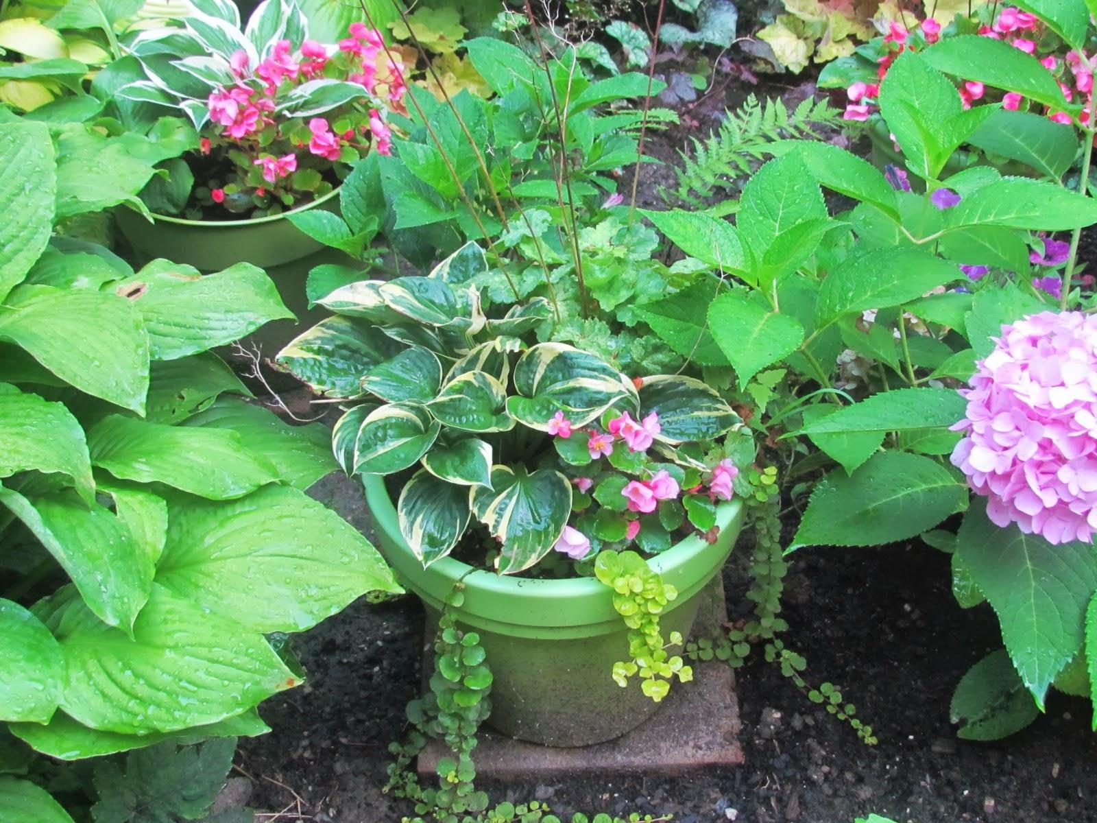 Fibermania Potted Perennials
