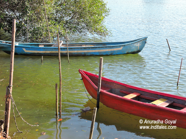 Boats at Moira Backwaters, Goa