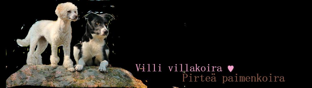 Villi villakoira & Pirteä paimenkoira