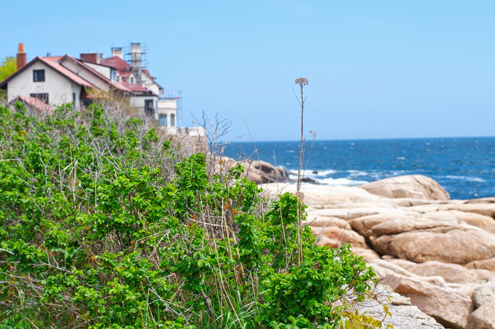 Beach roses and beyond that an ocean front estate.