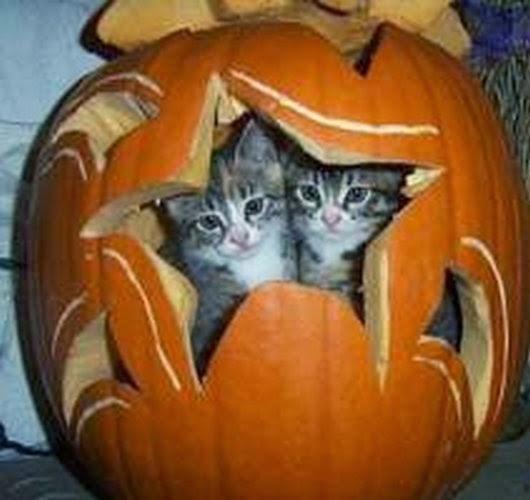 Funny halloween animals2-10