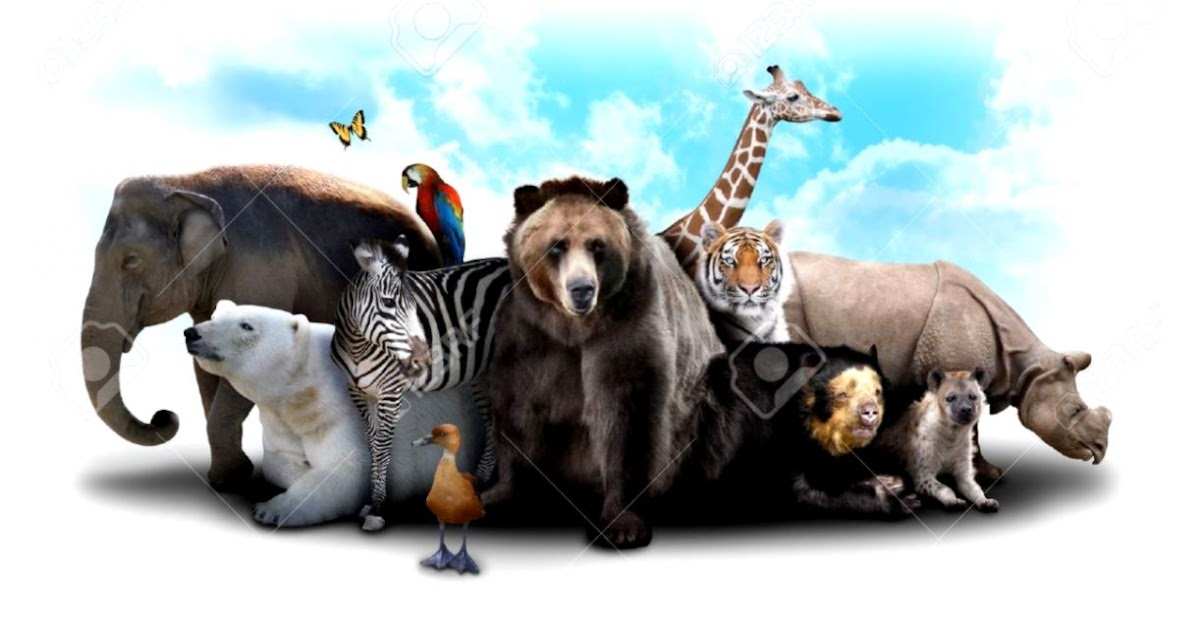 Zoo Animals Collage   Wallpapers Gallery